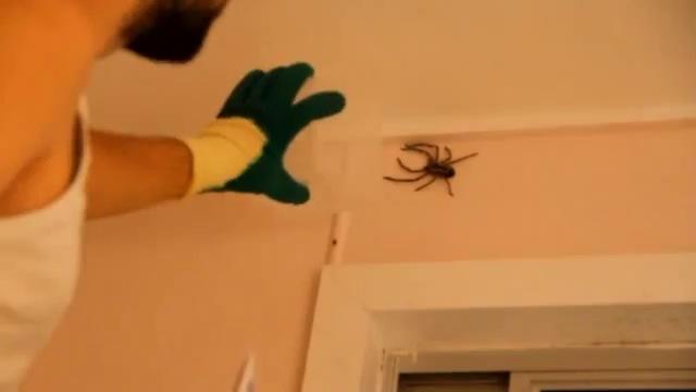 comment attraper une grosse araign e. Black Bedroom Furniture Sets. Home Design Ideas