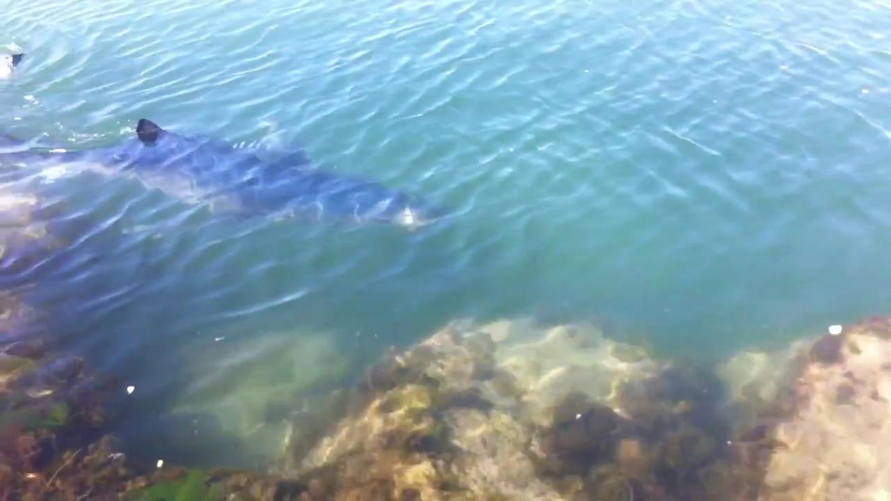 un requin 224 la grandemotte
