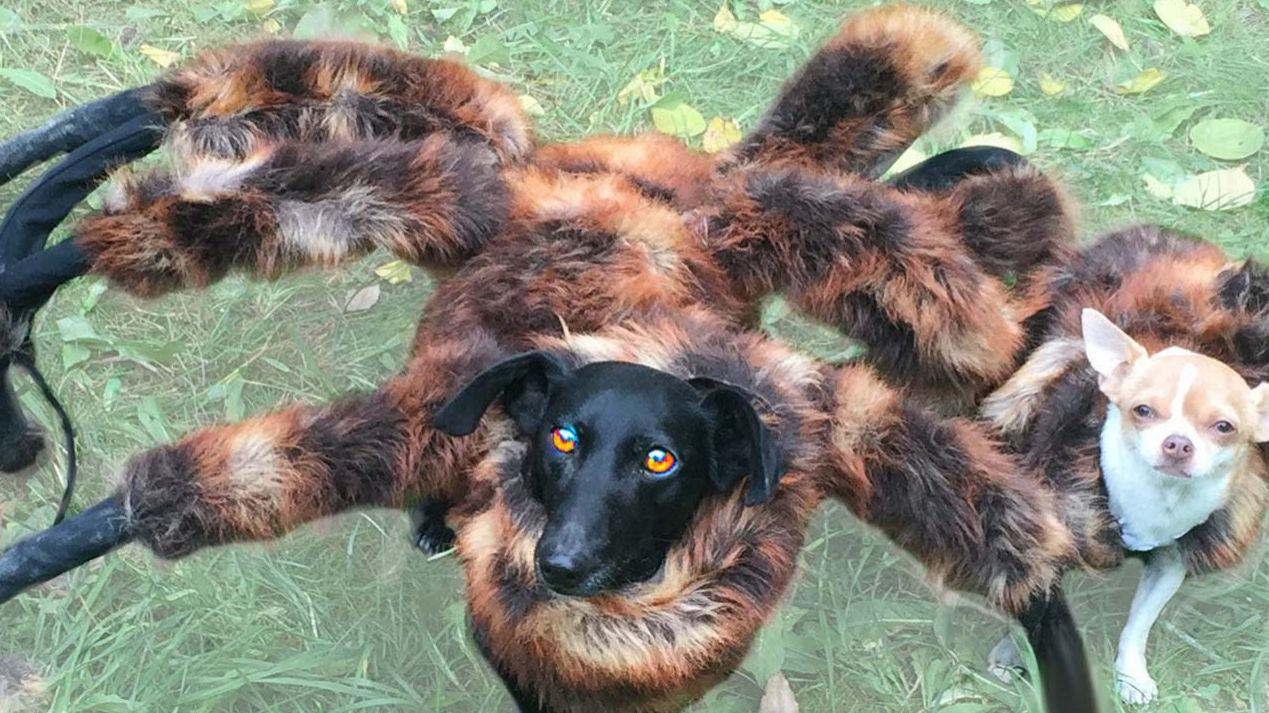 Spider Dog Halloween Costume