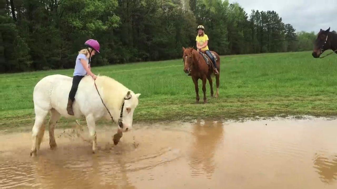 Un poney joue dans une flaque d 39 eau - Jeux de poney qui saute ...
