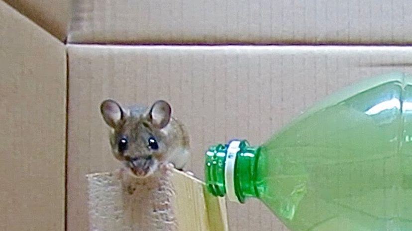 Pi ge souris avec une bouteille en plastique - Piege a souris fait maison ...