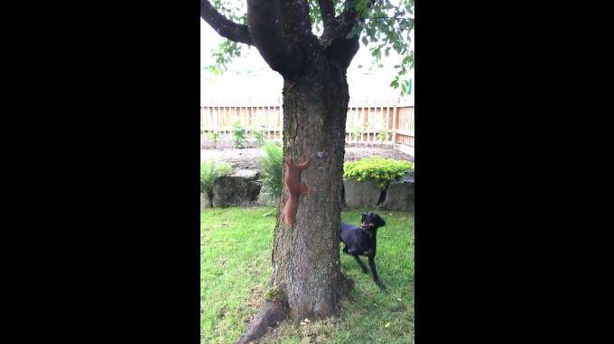 Un cureuil trolle un chien autour d 39 un arbre for Bordure autour d un arbre