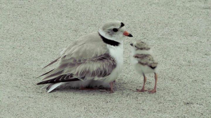Une maman oiseau fait un tour de magie - Explication tour de magie femme coupee en deux ...