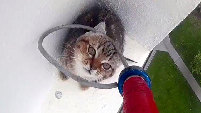 Le sauvetage d 39 un chaton bloqu sur un rebord - Enlever les puces sur un chaton ...