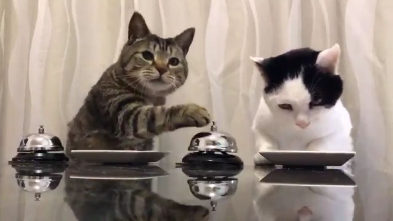 croquette chat constipé