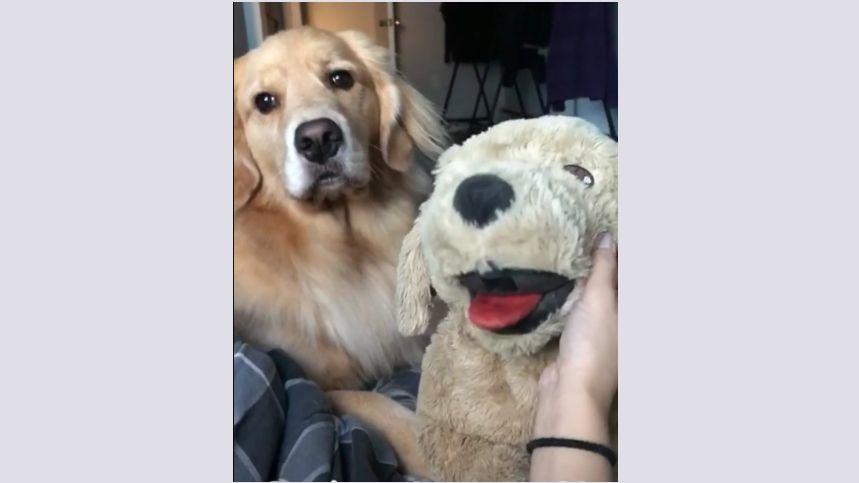 Tester la jalousie de son chien avec une peluche