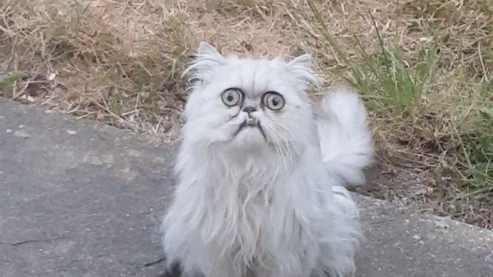 Un chat avec une drôle de tête