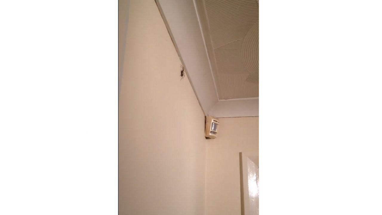 tuer une araign e avec une fl chette. Black Bedroom Furniture Sets. Home Design Ideas